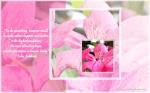 blossom soft