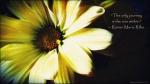 Rilke Wallpaper